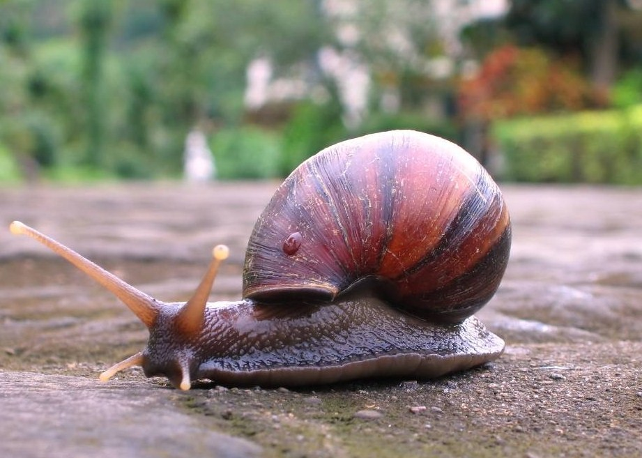 Snails: know your enemy