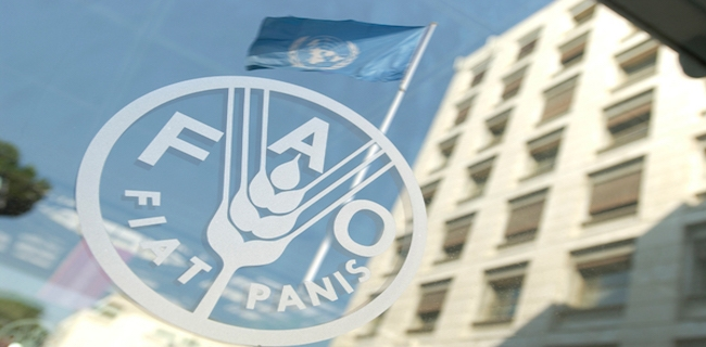 FAO-Food-and-Agriculture-Organisation.jpeg?fit=650%2C320