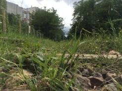 Overgrown rails