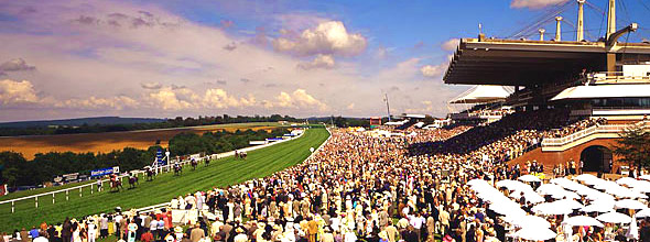 Image result for glorious goodwood