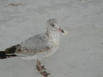 Bird attempting to eat Plastic