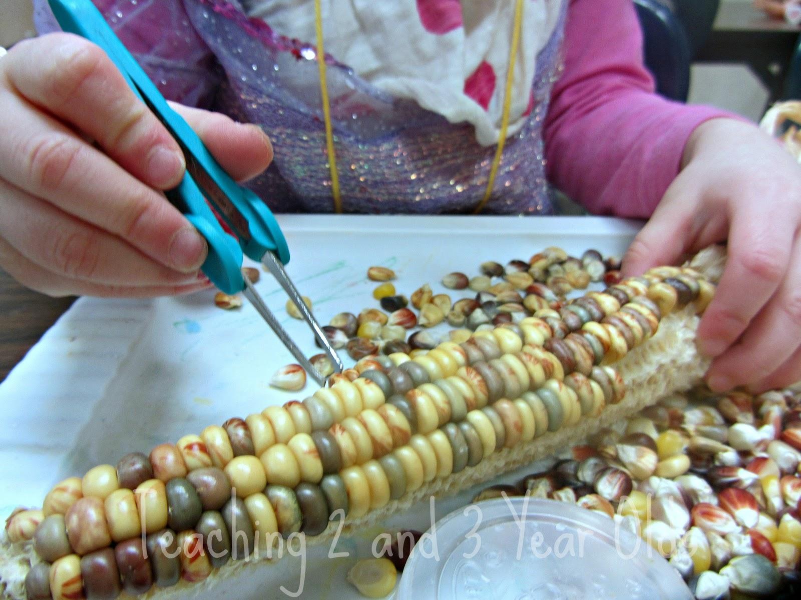 Tweezing Indian Corn
