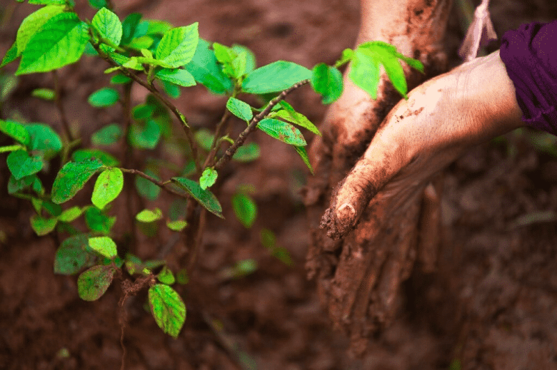 Planting tree as a carbon offset