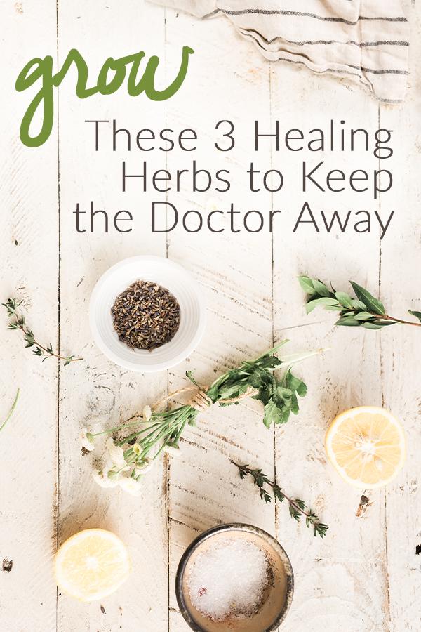 Grow These 3 Healing Herbs to Help Keep the Doctor Away