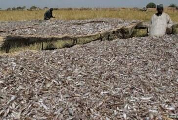 How Book Haram Sustain Operations Through International Trade in Smoked Fish