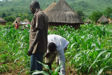 Joining the Food Blockade Campaign Would be Economically Injurious to Us — Benue Farmers