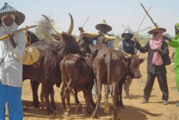Another Herdsmen Attack on Ngbo Community in Ebonyi