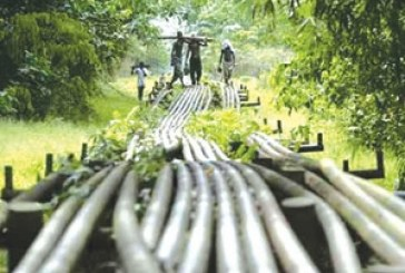 '13 percent oil derivation for N/Delta states not enough'
