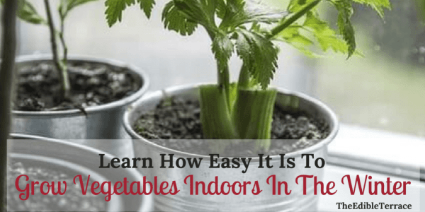 indoor gardening vegetables year round Learn How Easy It Is To Grow Vegetables Indoors In The Winter