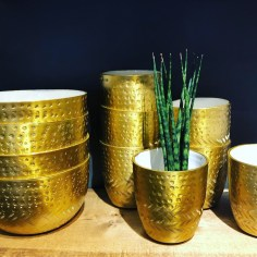 Gold drinkware serves as a plant pot