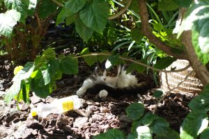 cat hiding in shrubs, Traveling with Teens, www.theeducationaltourist.com