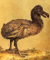 170px-Hoefnagel_dodo
