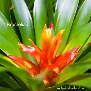 orange and yellow bromeliad, www.theeducationaltourist.com