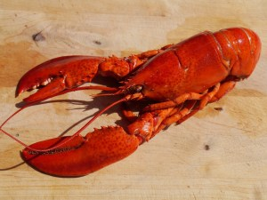 Maine Lobster - Wife Carrying, www.theeducationaltourist.com