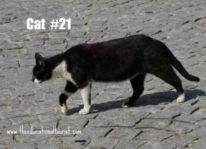cat in Morocco, Travel with Intention, www.theeducationaltourist.com