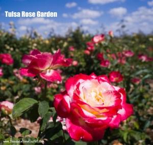 Tulsa Visit: Tulsa Rose Garden