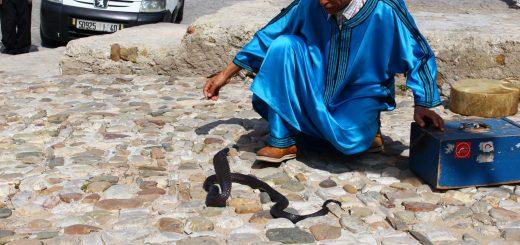 snake charmer in Kasbah Morocco