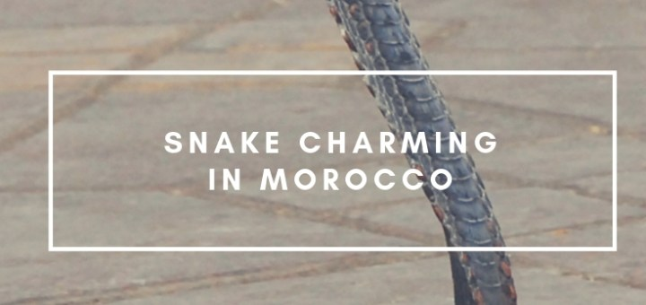 snake charming in morocco