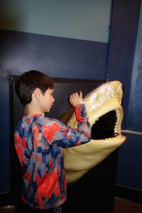 Oklahoma Aquarium Shark Senses