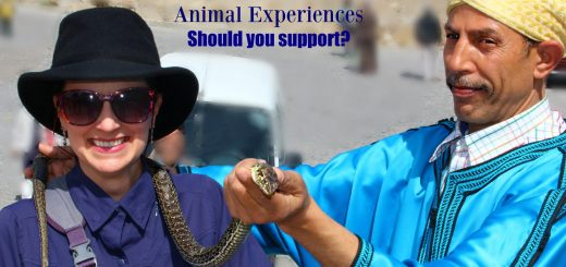 The Educational Tourist with snake charmer, Swim with dolphins, www.theeducationaltourist.com
