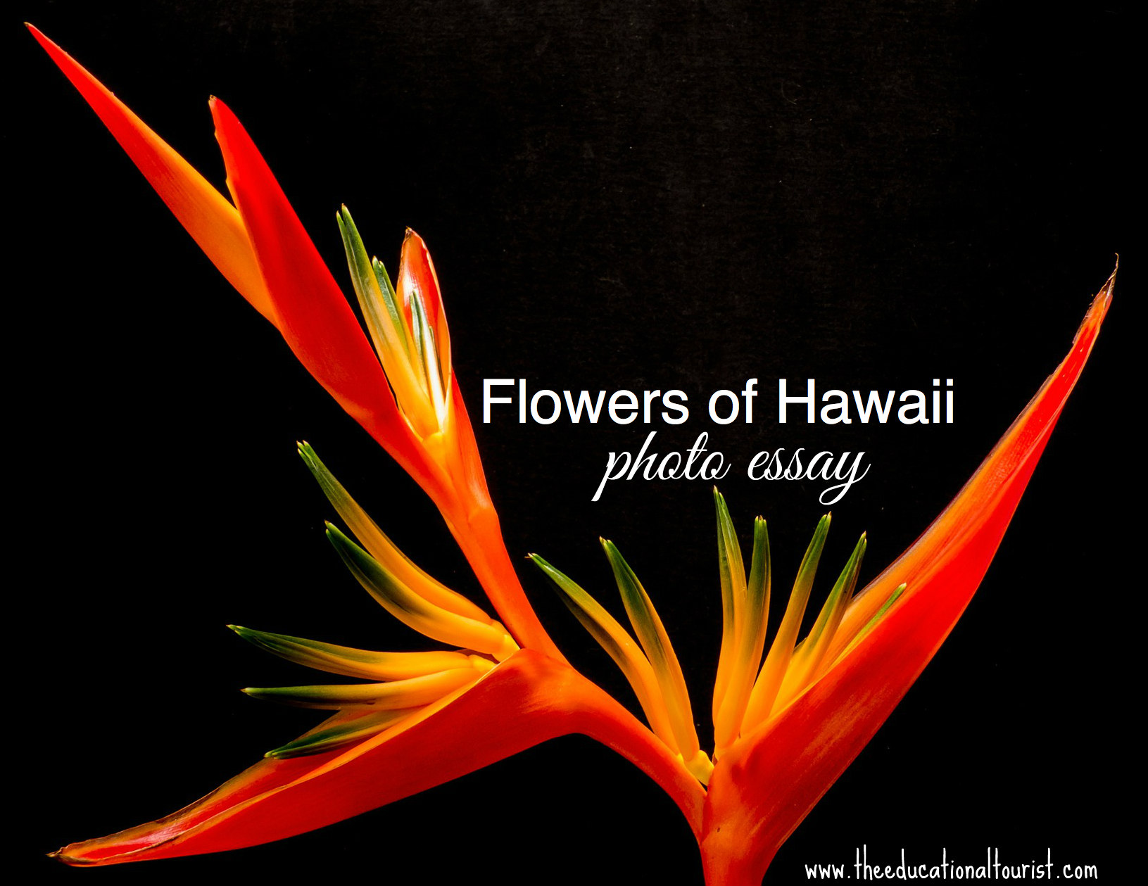 flowers of hawaii photo essay the educational tourist