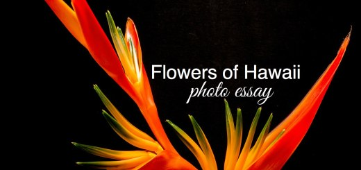 Bird of paradise, Flowers of Hawaii, www.theeducationaltourist.com