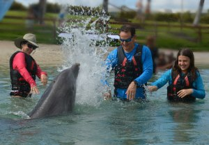 dolphin splashing The Educational Tourist and family, swim with dolphins, www.theeducationaltourist.com