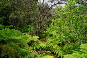 Lush foliage in Hawaii, Hawaii, the BIG island Hawaii, the BIG island