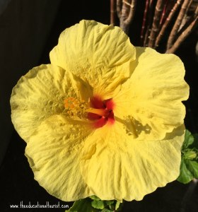 Yellow hibiscus with red throat, Flowers of Hawaii, www.theeducationaltourist.com
