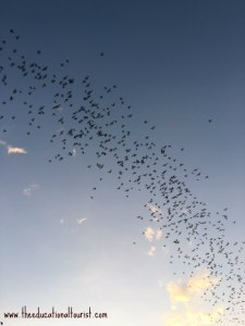 bats flying in the air - Austin, Texas