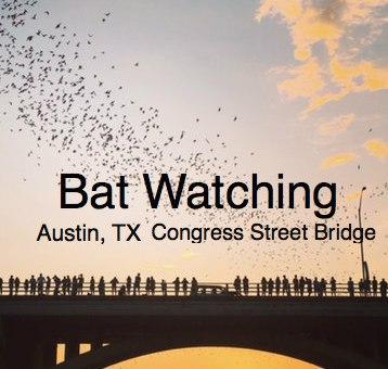 bats flying from under bridge austin texas
