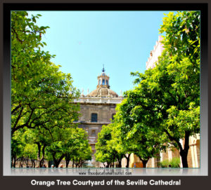 orange tree courtyard in the Seville Cathedral