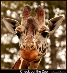giraffe places to see in Texas