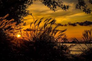 marsh scene at sunset, photography tips for families