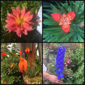 flowers of the flower farm in Colombia Santa Elena