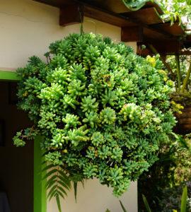 succulent flower farm colombia