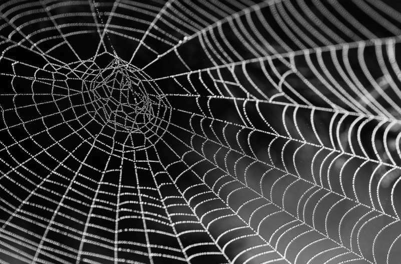 Building A Web Of Knowledge - The Effortful Educator