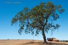 Winery Tree