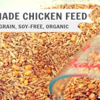 Organic Homemade Chicken Feed.