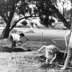 PikiWiki_Israel_291_Kibutz_Gan-Shmuel_bs2-_6_גן-שמואל-בהמתנה_1967