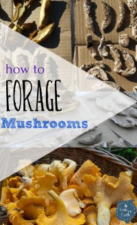 Magic & Mushrooms learn how to forage for alternative medicinal treatments that will save you money and quite possibly your life. Take a more sustainable approach to life Pin Now and save for later-The Ends Of The Earth Blog