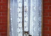 Lace Curtain Irish Catholic