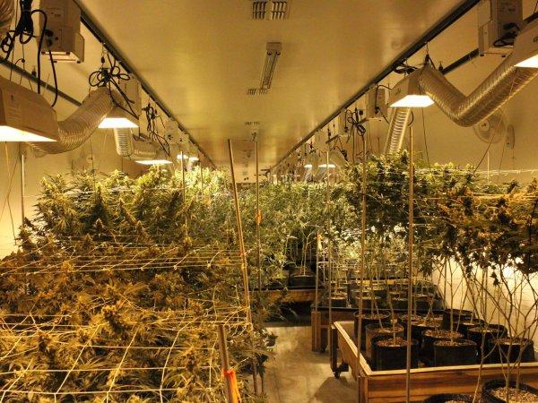 denver-relief-marijuana-growery-tour-15