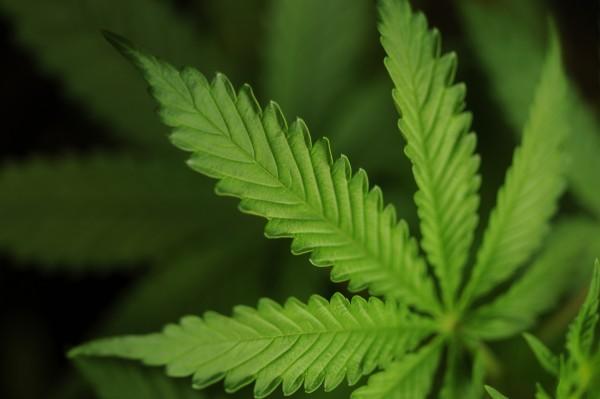 MedicalMarijuana2-JCR-600x399