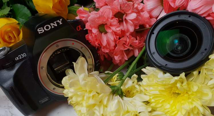camera with lens in a bed of flowers