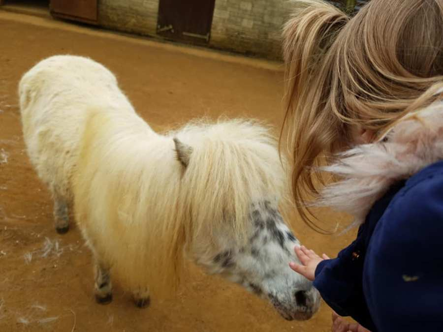 Shaniah is stroking the head of a miniature pony.