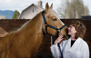 A veterinarian poses with a horse.