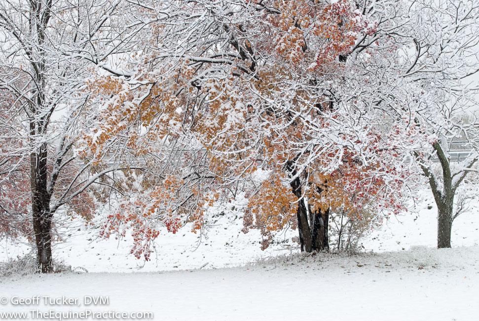 Winter road scene in New York