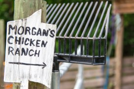 Morgan's chicken ranch
