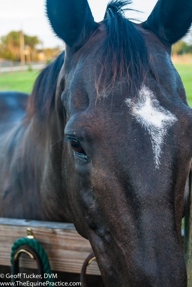 0807, FL, Horses- Tucker-7067